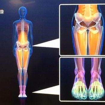 足指を使えることと、インナーマッスルの連動について